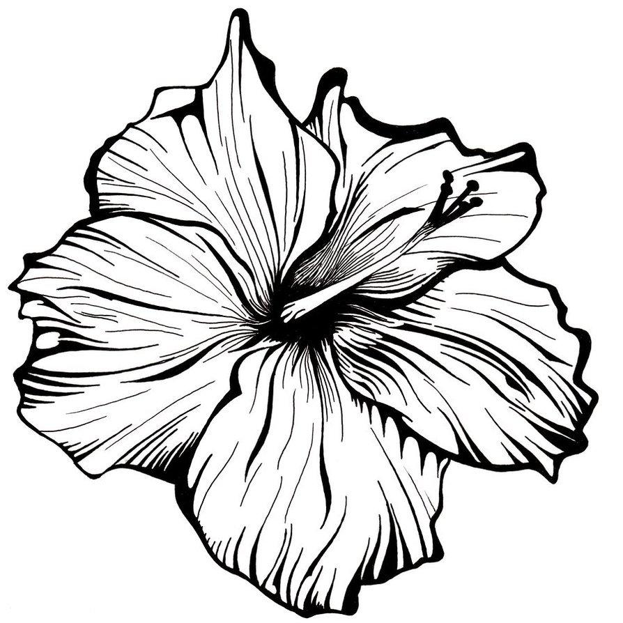 894x894 Lehua Flower Clip Art Sketch Ideas And Designs
