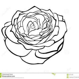 336x336 Black And White Rose Vector Drawing Flowers Line Clip Border Step