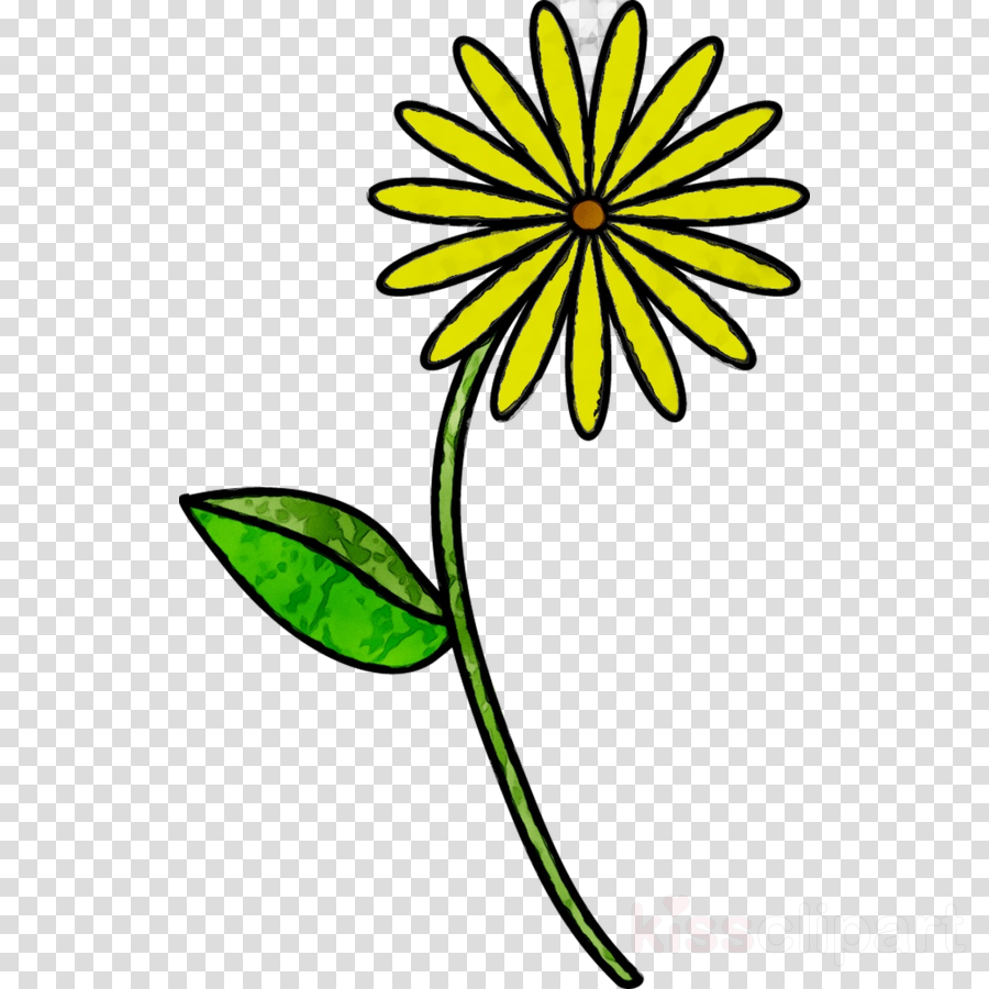 900x900 Drawing, Flower, Art, Transparent Png Image Clipart Free Download