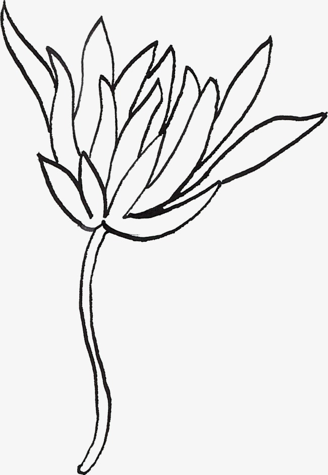 650x941 line drawing flowers, line clipart, black, line png image