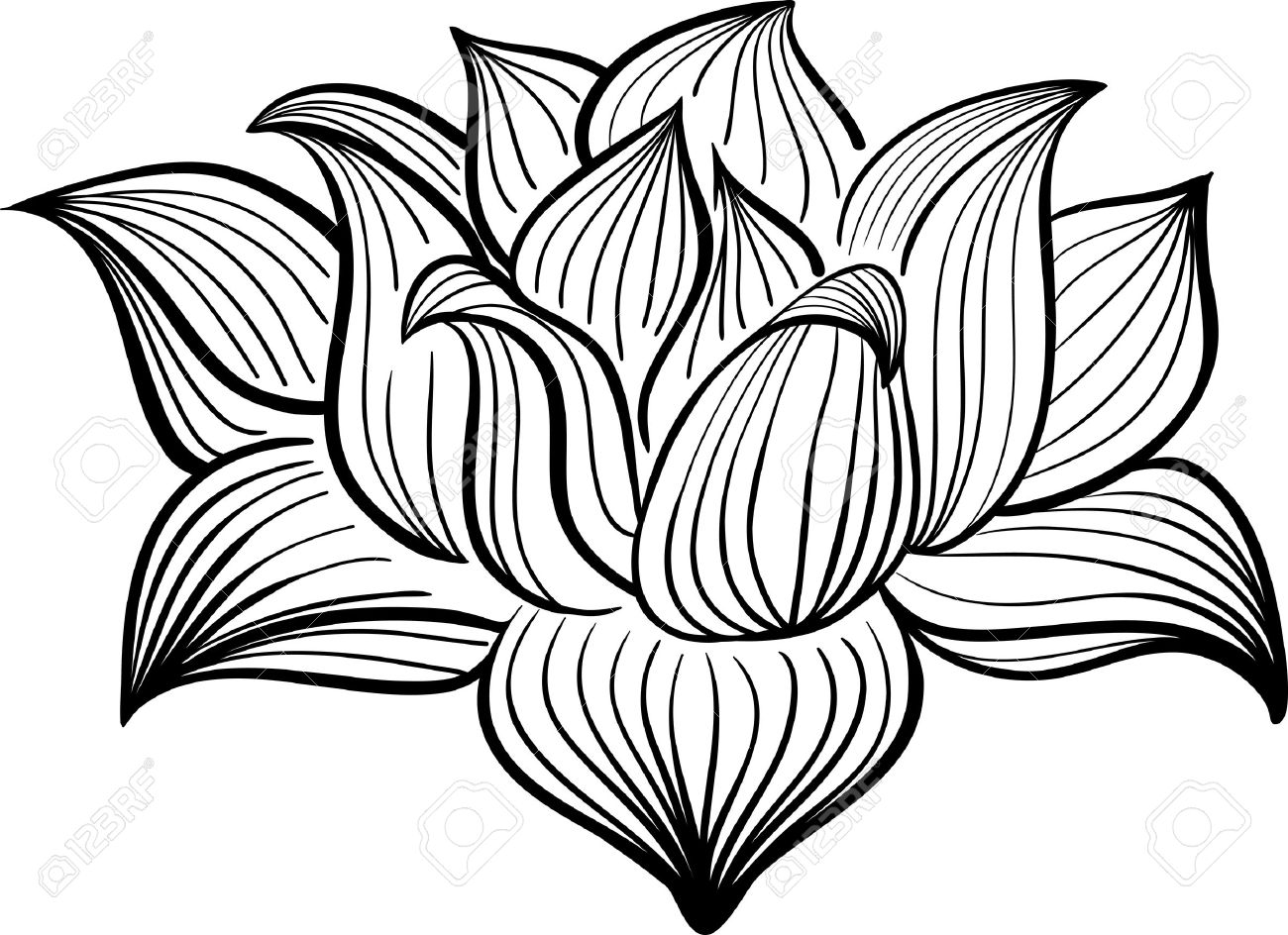 1300x944 Lotus Flower Line Drawing Free Download Clip Art