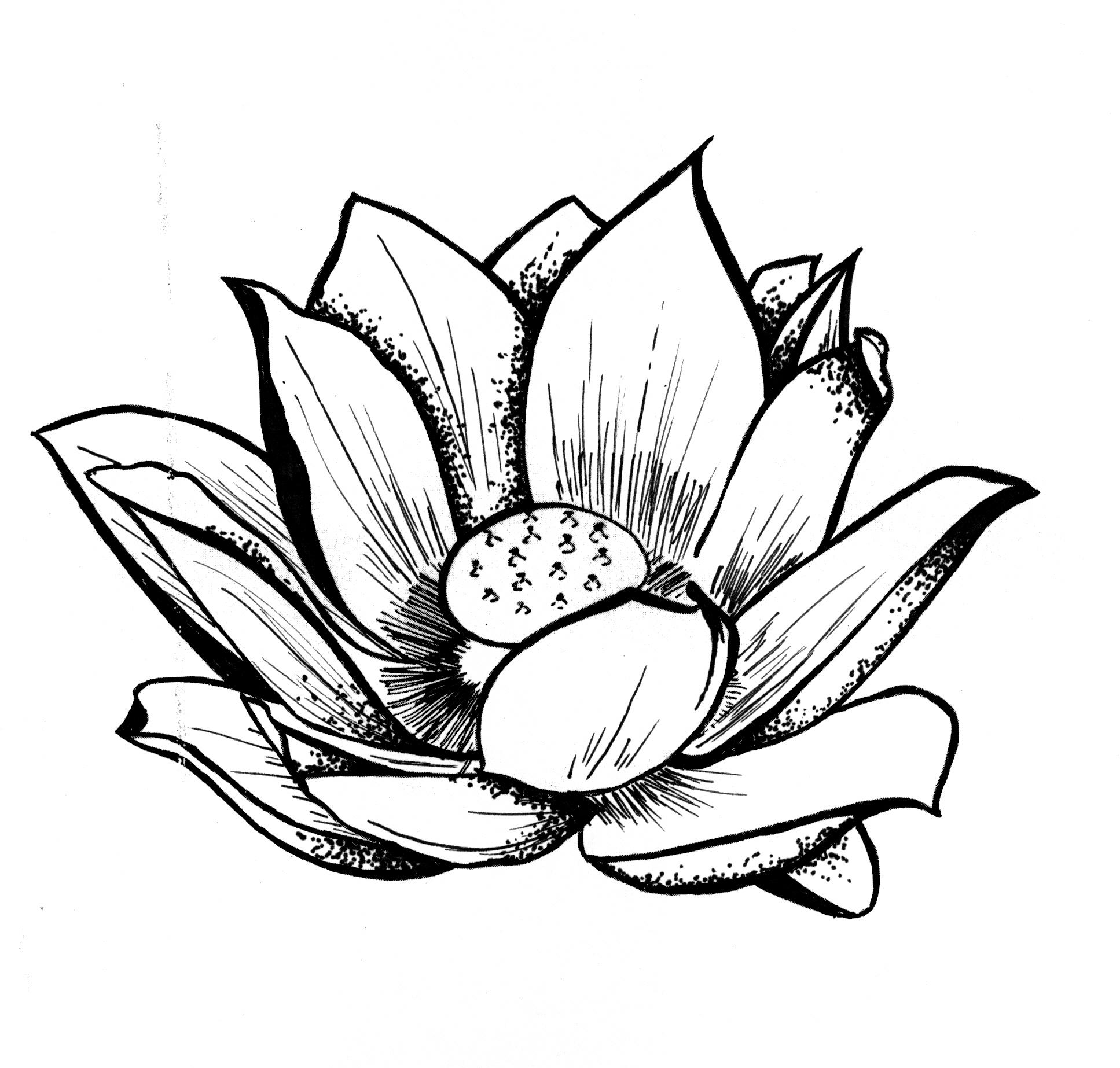 1935x1846 Lotus Flower Line Drawing And Free Lotus Drawing, Download Free