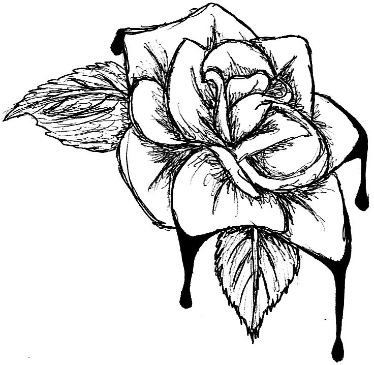 736x718 Drawing Flowers Tutorial Or Free Line Drawing A Rose Download