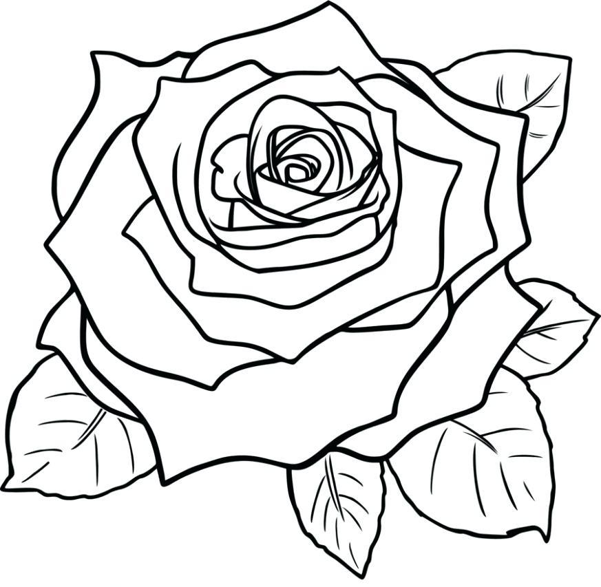 873x853 Flower Drawing Clip Art Line Drawing Flowers Clip Art Flower Vase