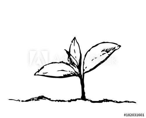 500x405 Flower Drawing Vector Illustration And Line Art Illustration