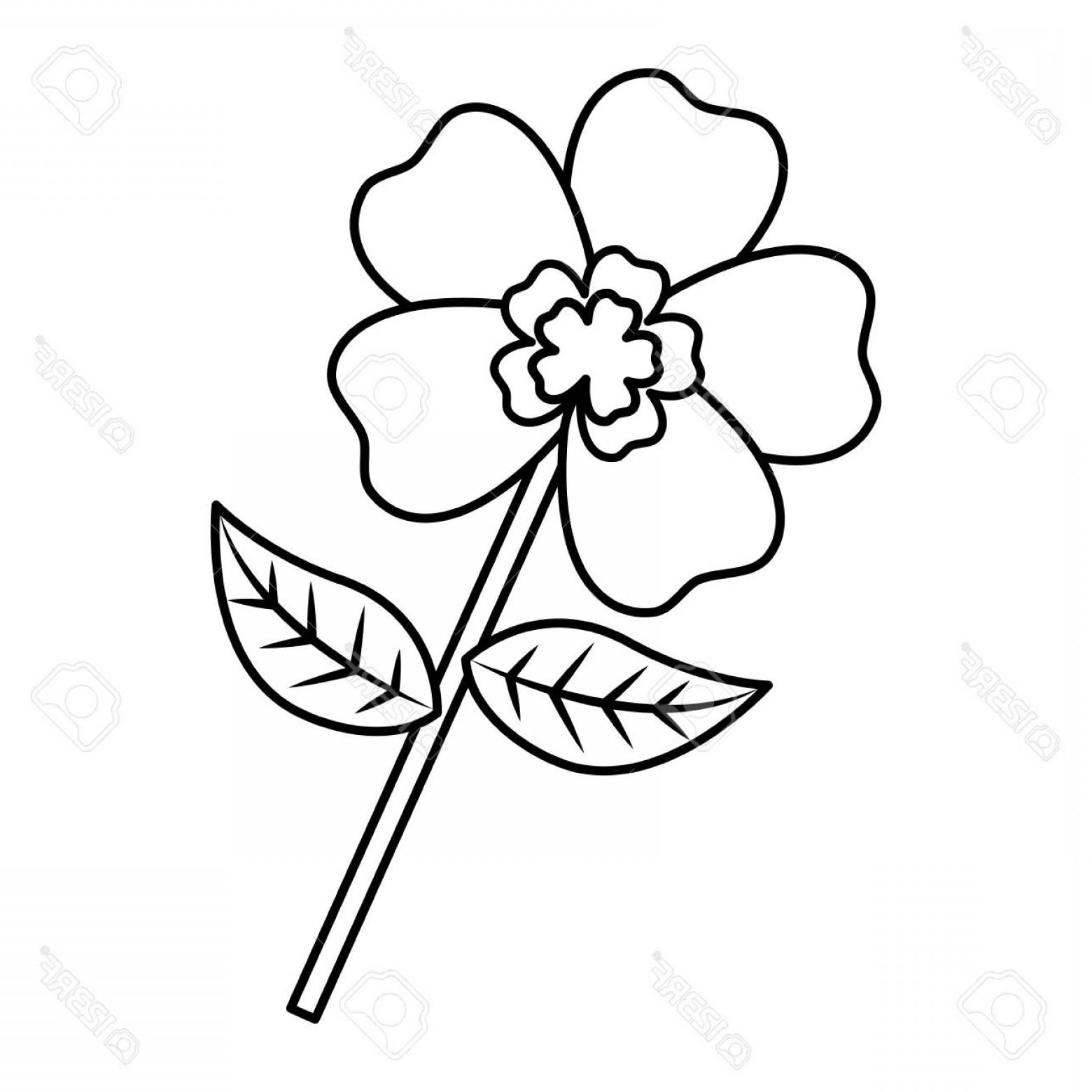 1560x1560 Vector Flower Stem Design Soidergi