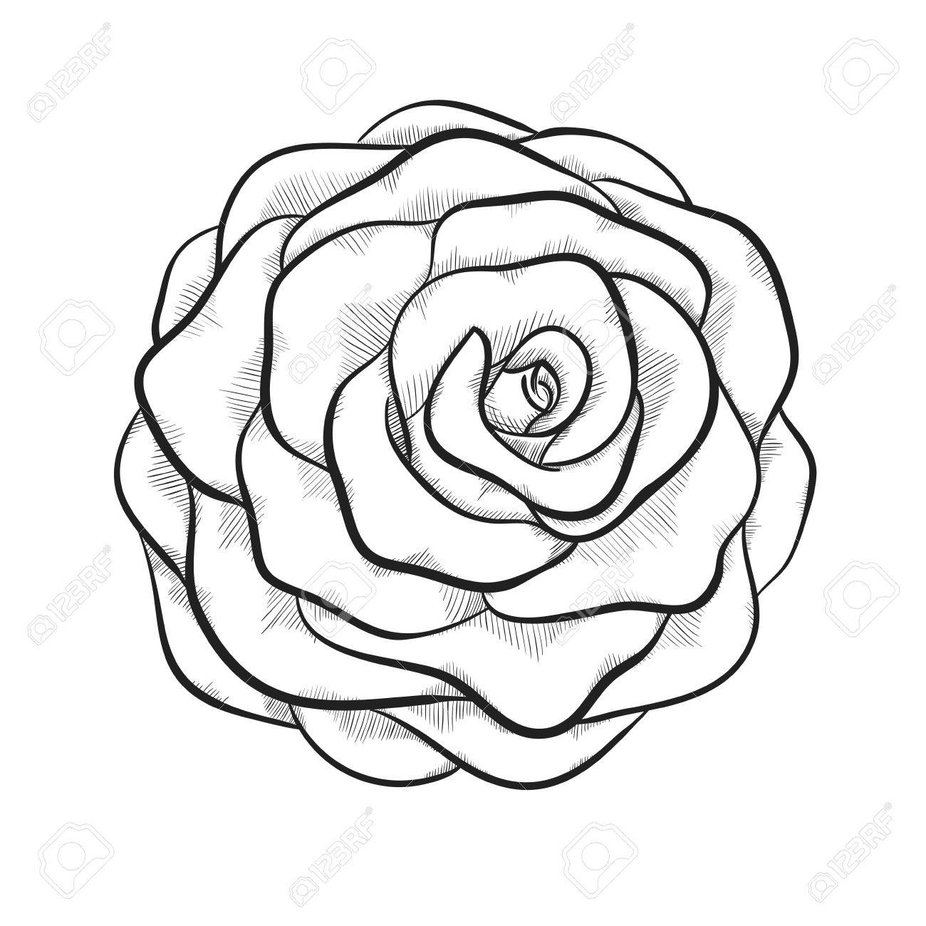 1300x1300 Black And White Rose Pencil Drawing Vector Free Flowers Line