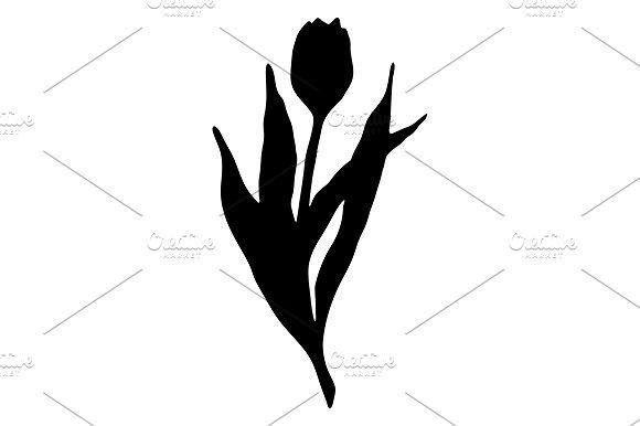 580x386 Black Tulip Flower Line Art Vector Romantic Design Black Tulip