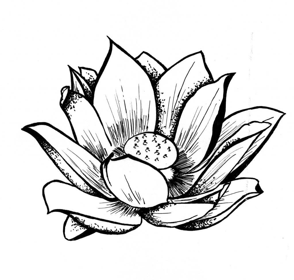1024x976 Lotus Flower Line Drawing Free Download Clip Art
