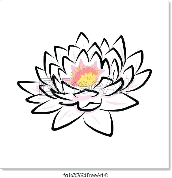 561x581 Lotus Drawing