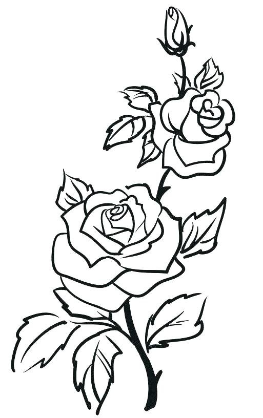 513x816 simple rose outline rose drawing outline rose outline drawing