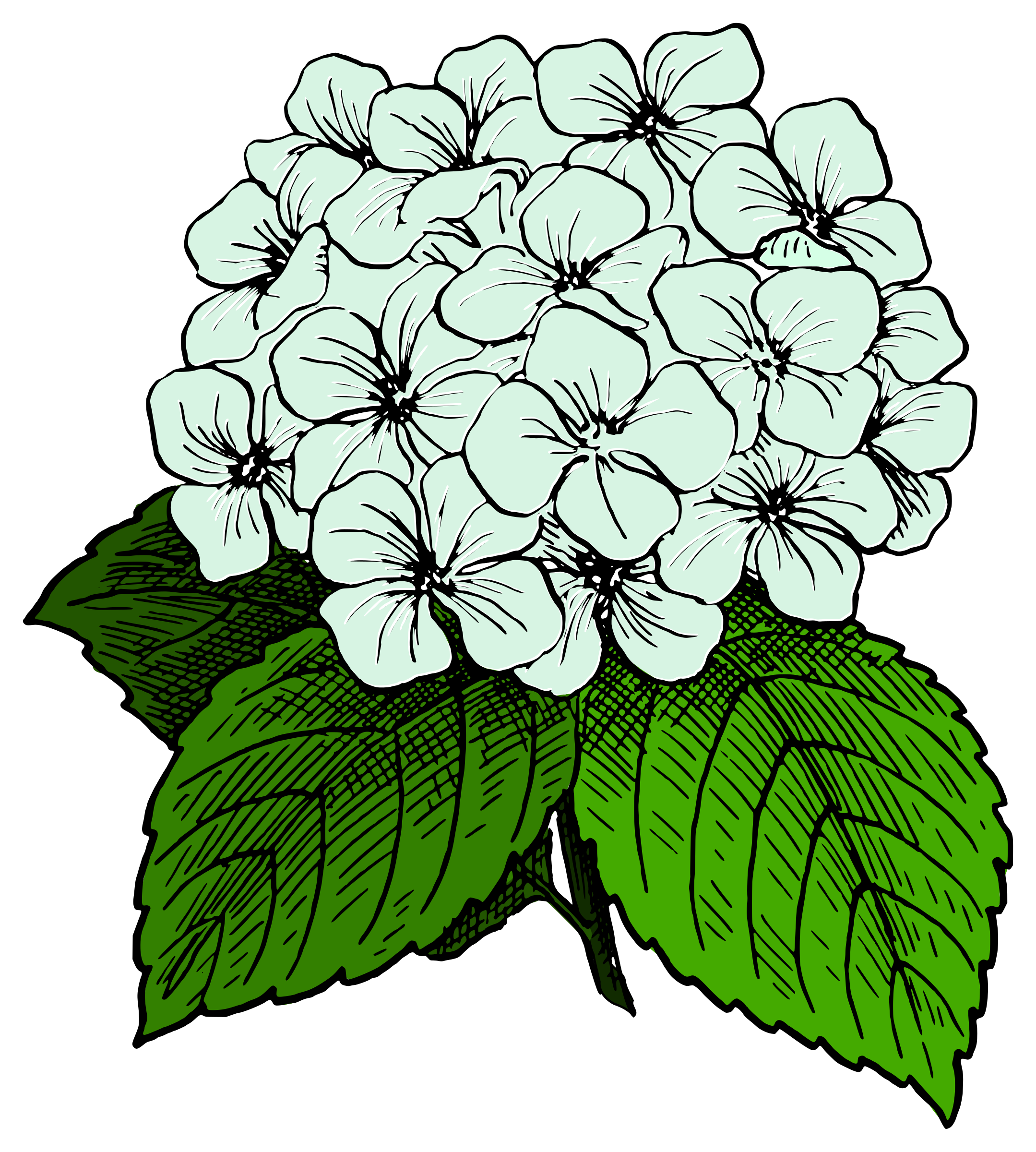 2159x2400 Collection Of Free Pastel Drawing Hydrangea Download On Ui Ex