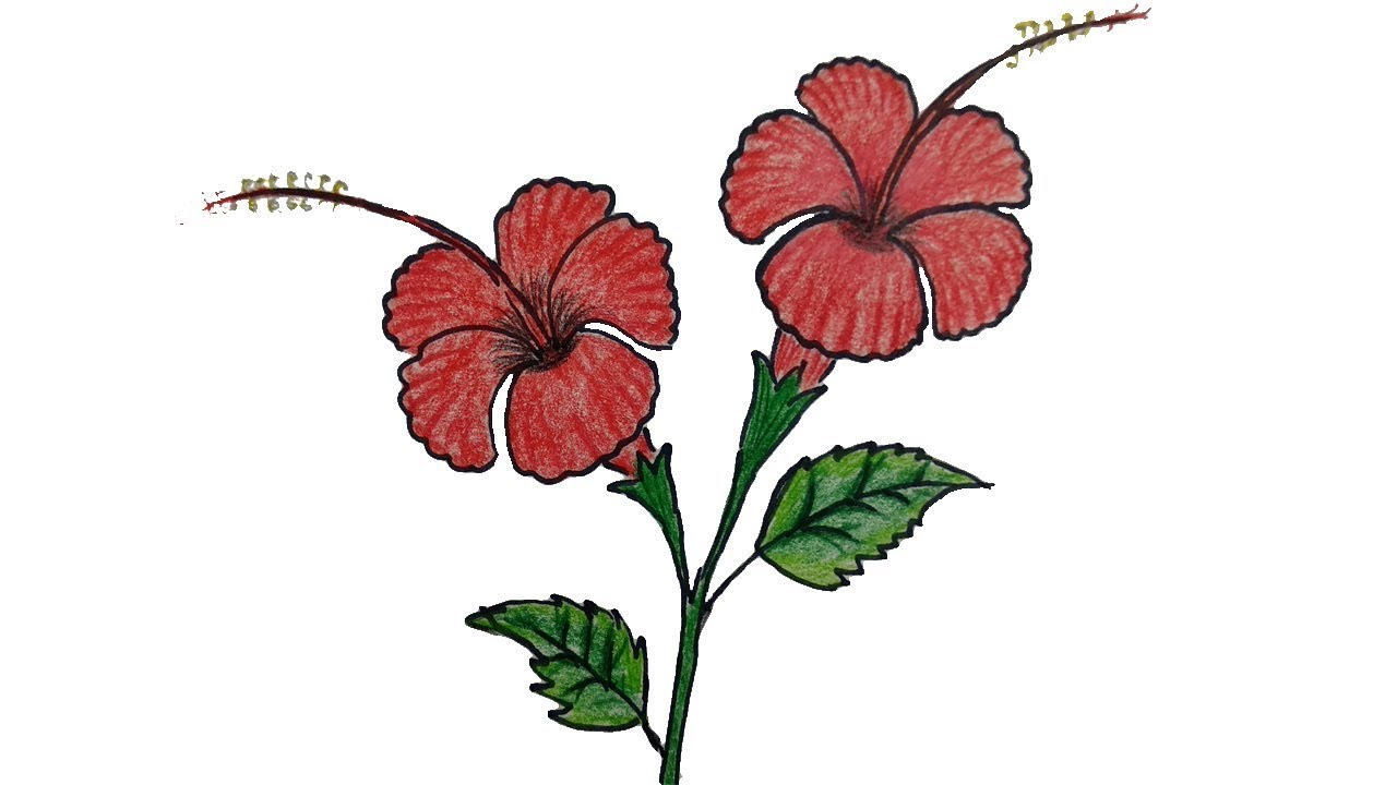 1280x720 How To Draw A Hibiscus Flower Step
