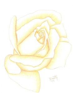 235x300 Pastel Flower Drawings