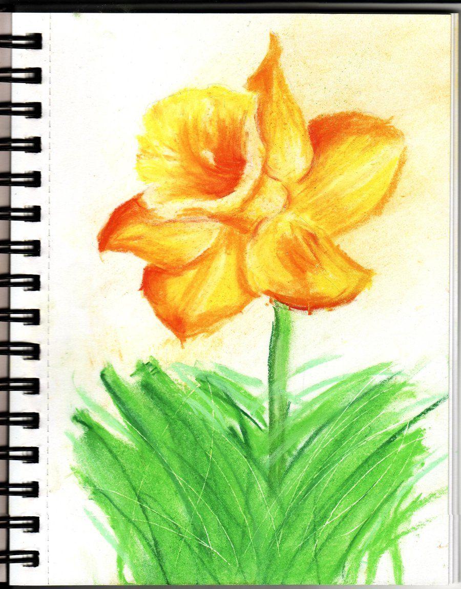 900x1148 Chalk Pastels Daffodil