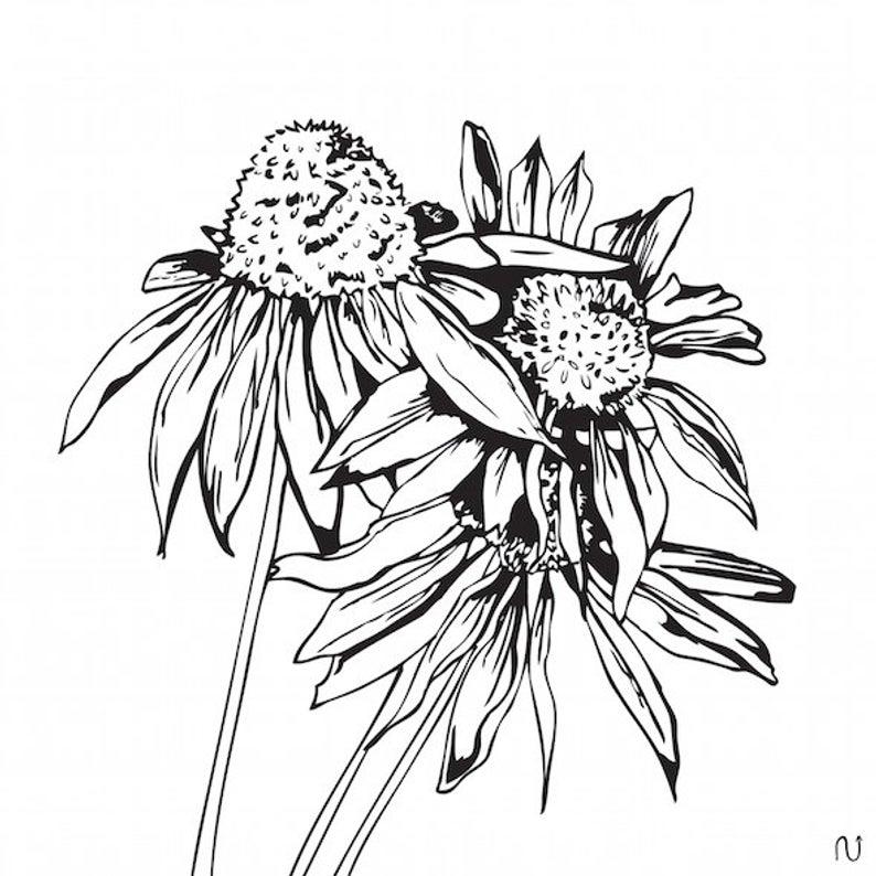 794x794 Echinacea Digital Print Flowers Botanical Illustration Etsy