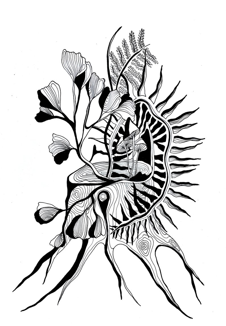 794x1145 Ferns And Flowers Pen And Ink Drawing Mushrooms Black And Etsy