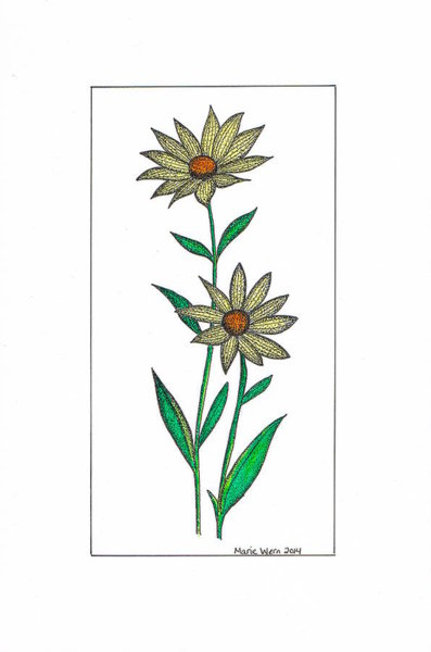 397x600 Flower Pen Drawings
