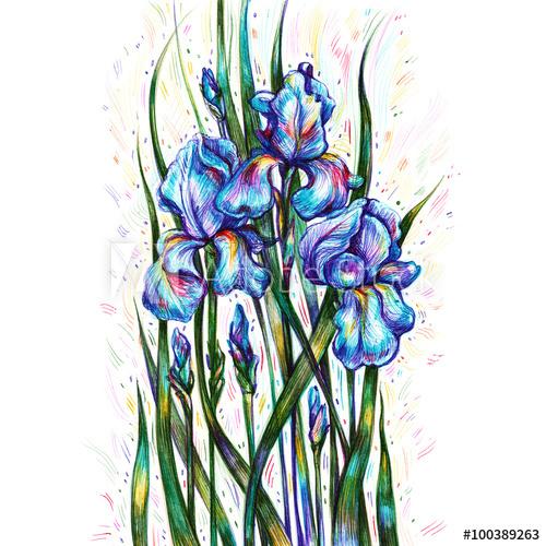 500x500 Bouquet Of Blue Irises On A White Background, Ballpoint Pen