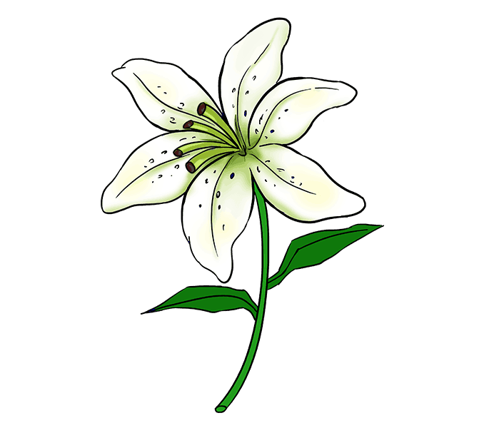 678x600 Collection Of Free Pen Drawing Lily Download On Ui Ex
