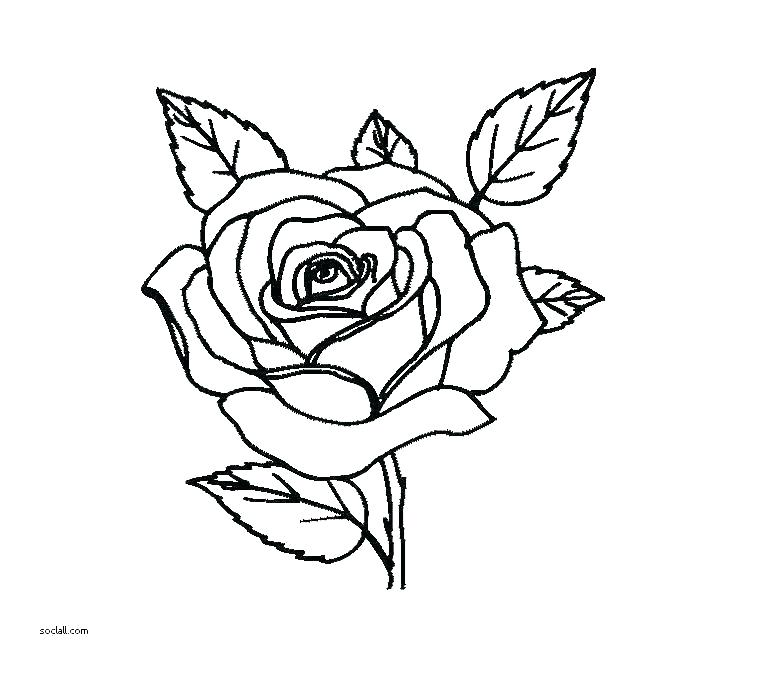 760x676 flower vase coloring pages flower vase coloring