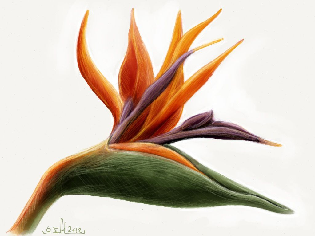 1024x768 Excellent Drawing Of Birds On Flowers Photos