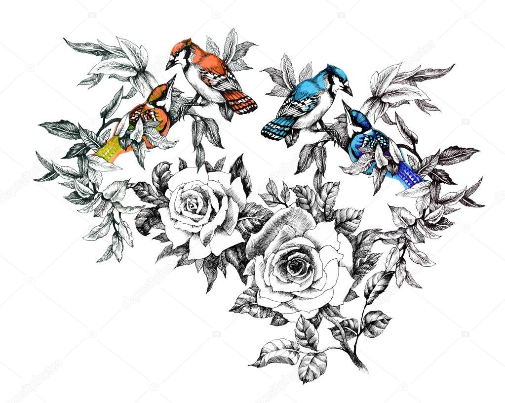 1023x816 Drawings Of Flowers And Birds Drawn Lovebird Old Fashioned Flower