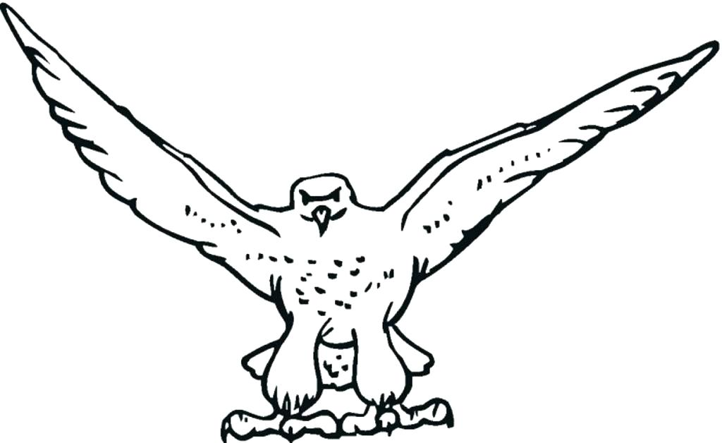 1024x628 Falcon Fantastic Bird Coloring Pages For Girls Pdf Adults Flowers