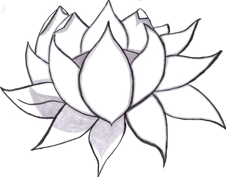 736x577 How To Draw Really Cool Flowers How To Draw A Hibiscus Flowers
