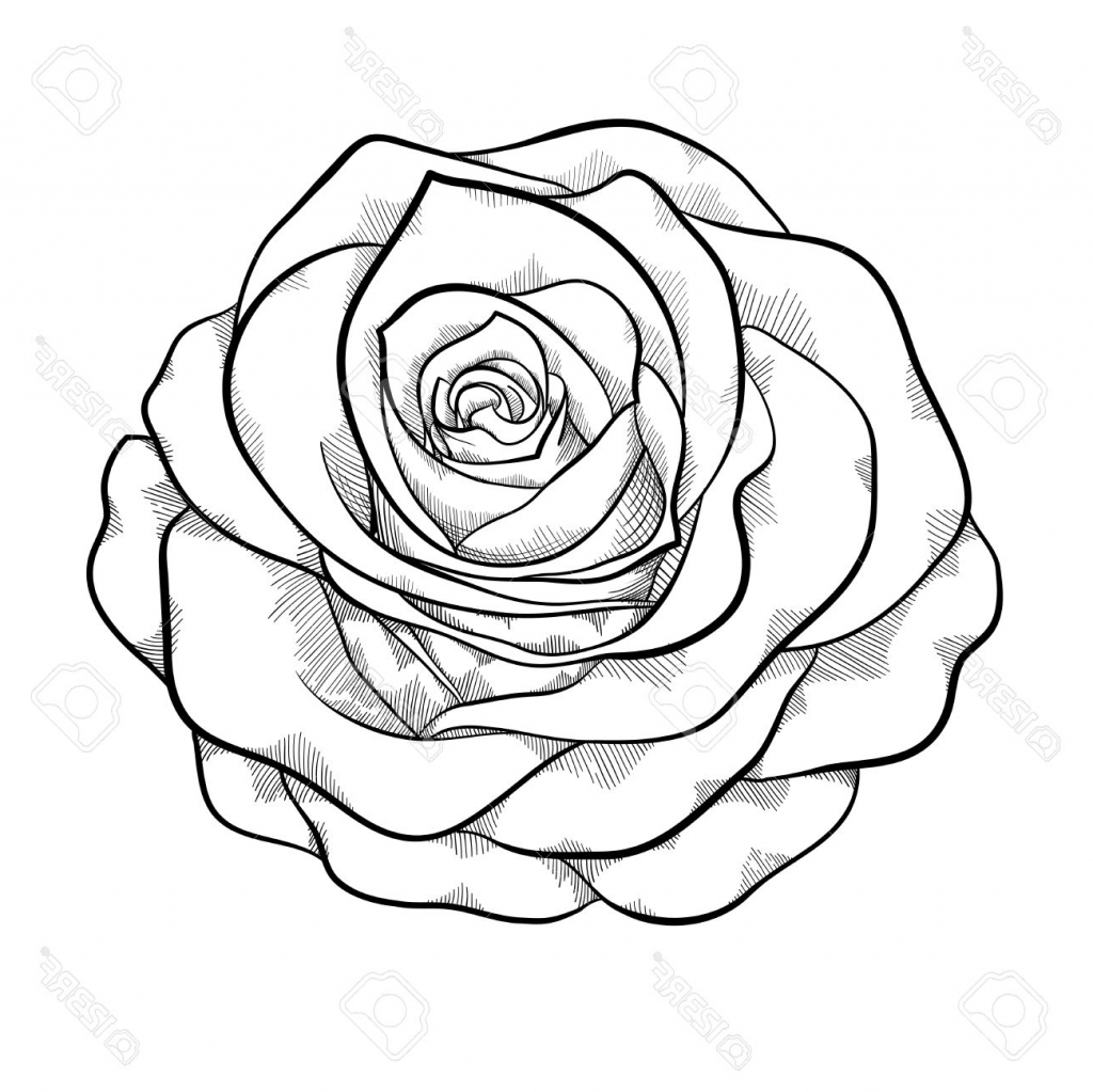 1024x1023 Realistic Rose Drawing Black And White Tumblr Flowers Step Simple