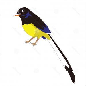 300x300 Beautiful Bird Drawing With Flowers Gm Sohadacouri
