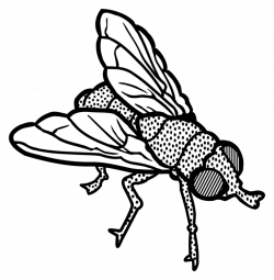 250x255 Drawing Insect Fly, Picture