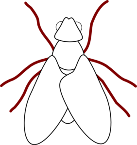 282x299 Fly Line Drawing Png, Clip Art For Web