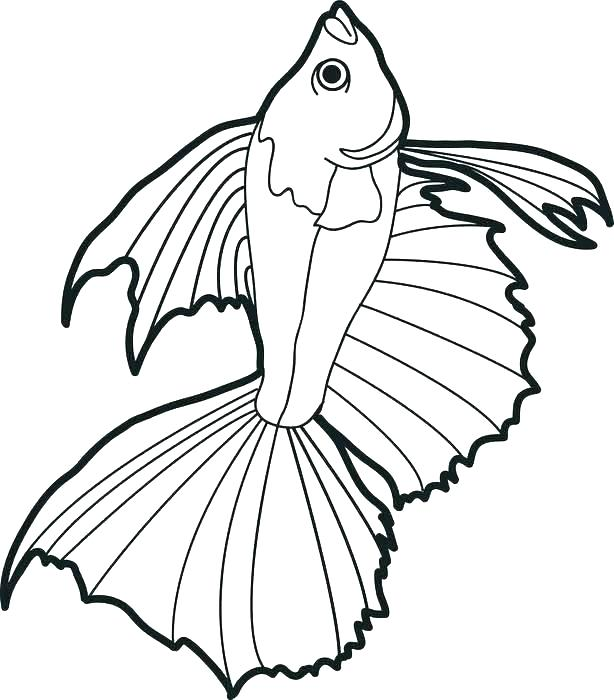614x700 Coloring Pages Fly Fishing