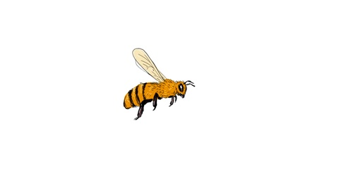 480x270 Bee Flying To Side Drawing Animation Clip