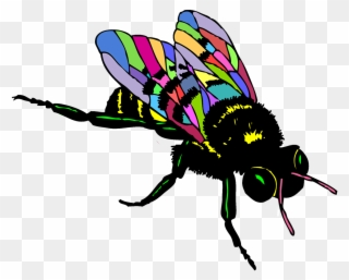 320x257 Download Fruit Fly Cartoon Png Clipart Drawing Clip
