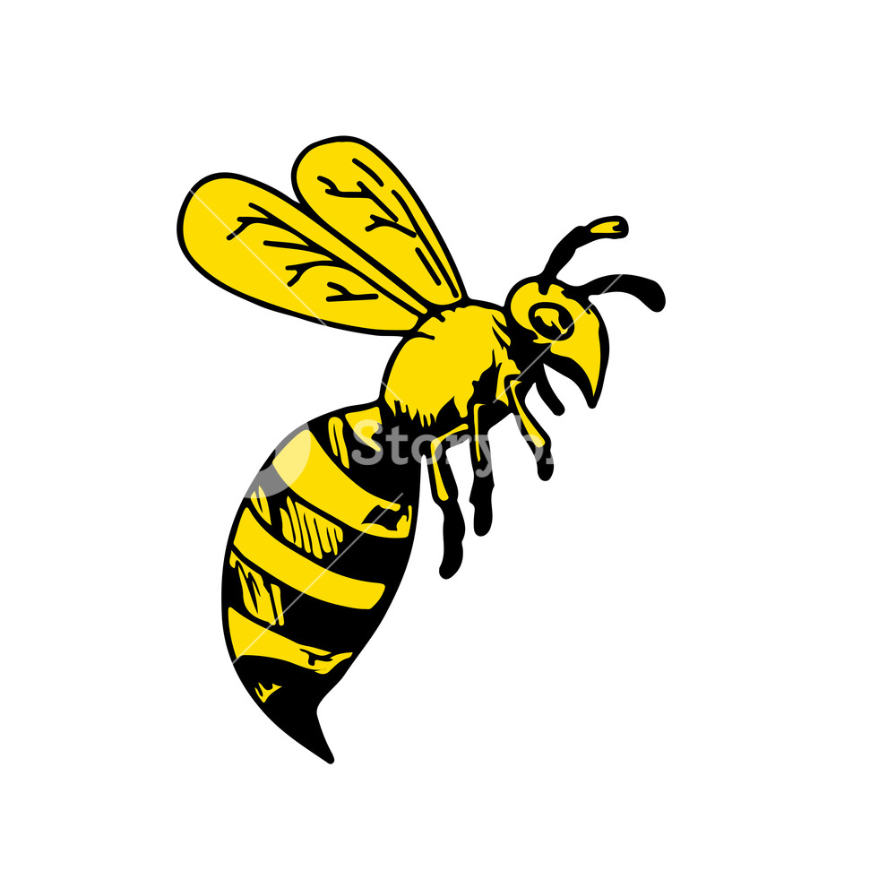 1000x1000 Drawing Sketch Style Illustration Of A Yellowjacket Wasp Or Hornet