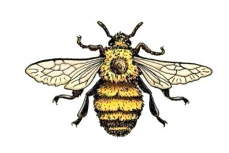 448x299 Bee Drawings