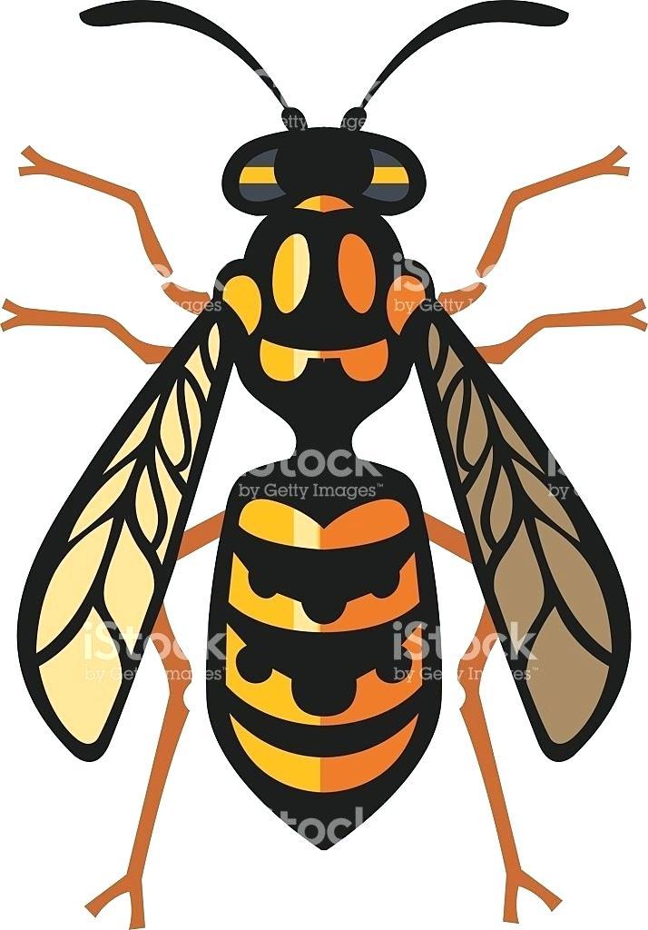 714x1024 Bee Drawings Buy Art Honey Bee Drawings Free