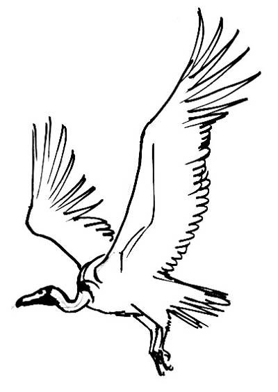 400x563 Flying Vulture Picture Art In Drawings, Vulture, Animal