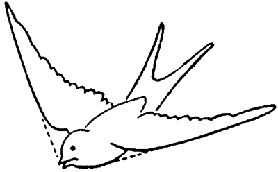 400x248 How To Draw Birds Swallows With Easy Step