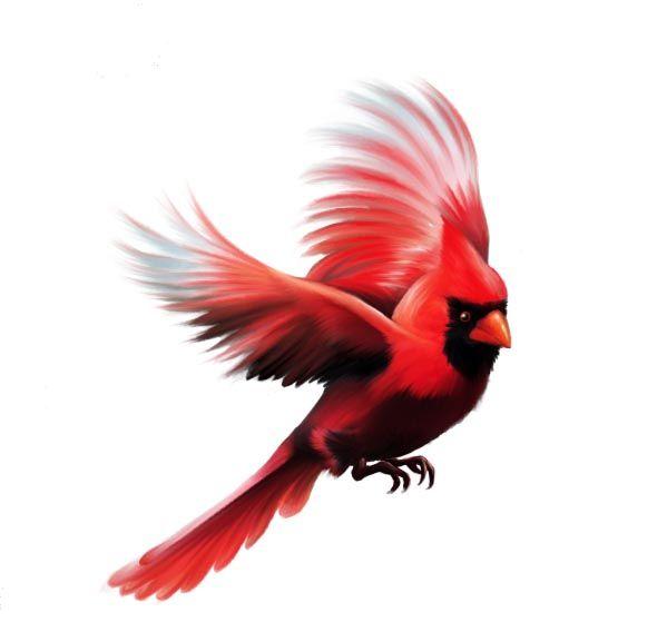 590x568 cardinal bird flying cardinal flying tattoo digital cardinal