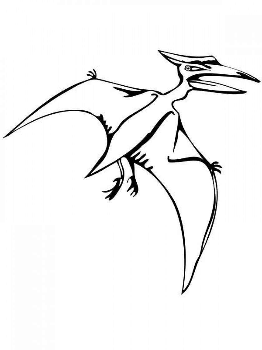 840x1120 Flying Reptile Coloring Page
