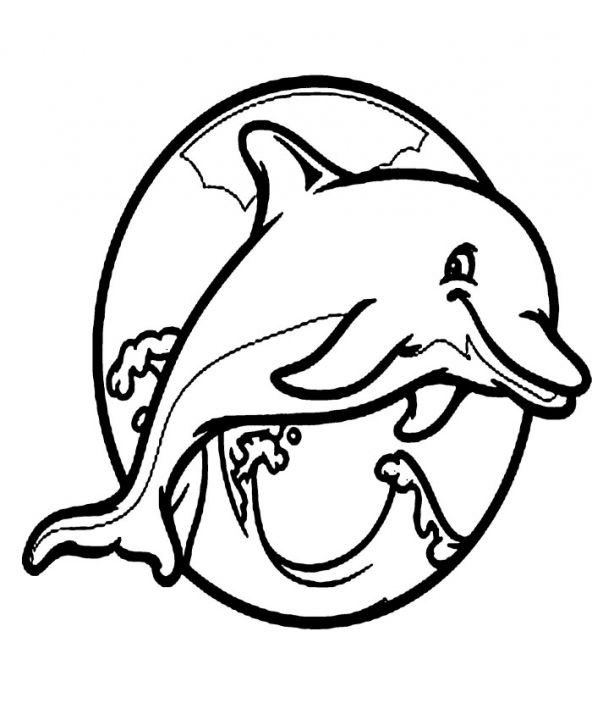 592x720 Image Result For Flying Dinosaurs Drawing Climbing Dolphin