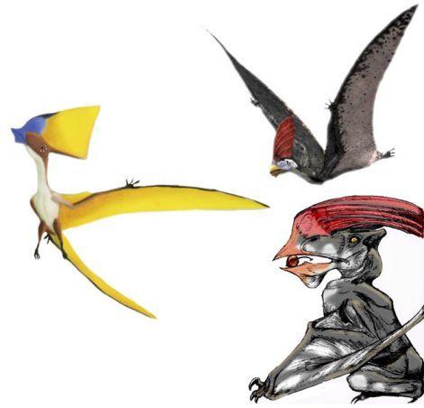 470x452 Pterosaur