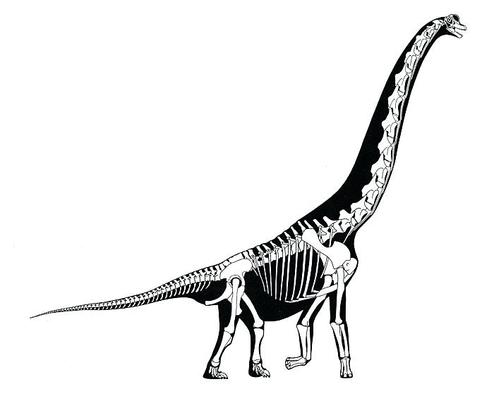 700x562 How To Draw Dinosaur Bones