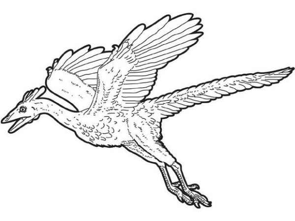 600x450 Cearadactylus Flying Dinosaurs Coloring Pages Dinosaurs Pictures