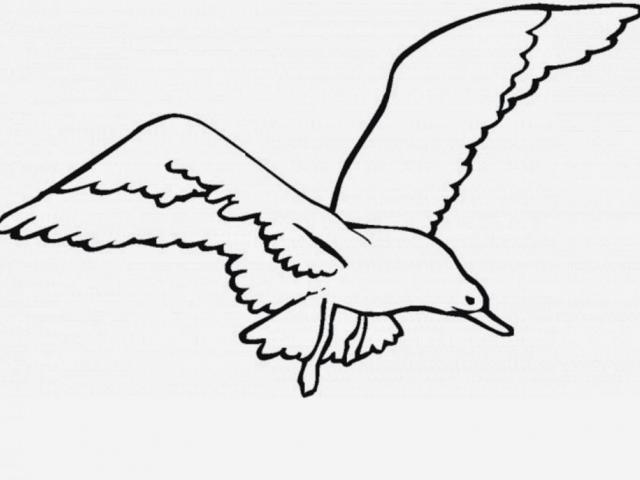 640x480 Flying Bird Clipart Drawing