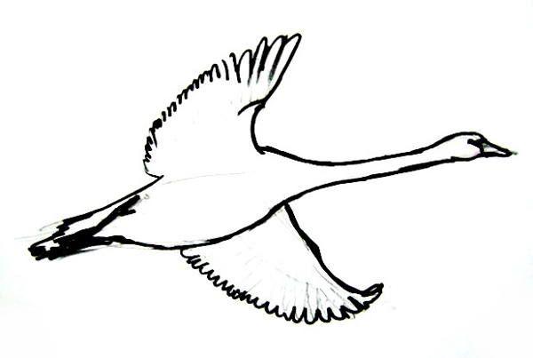 600x403 Flying Goose Picture Raskraski In Goose Drawing, Drawings
