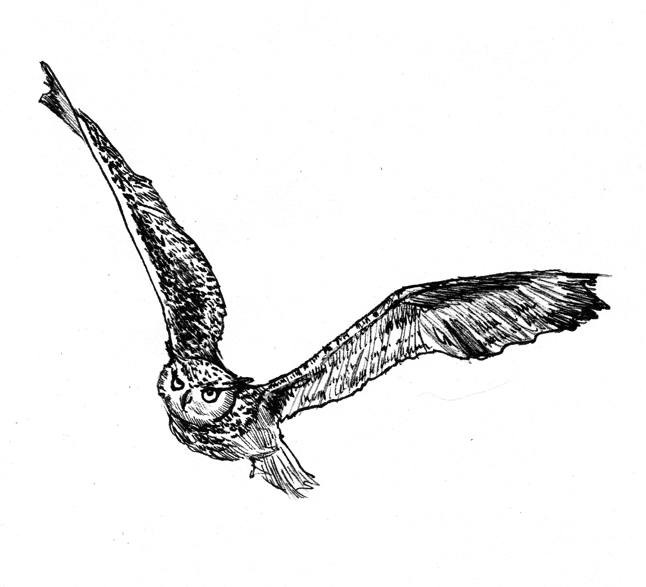 2112x1918 Flying Owl Drawing